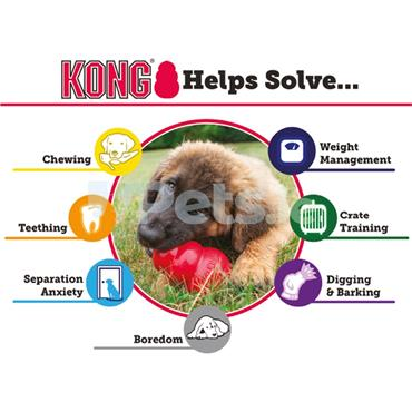 Blue Ball Puppy Toy