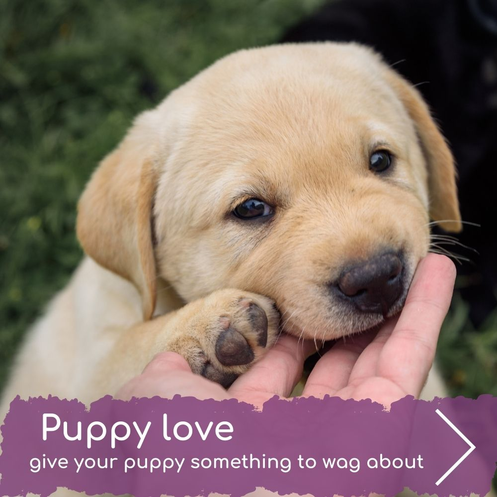 Give your puppy something to wag about