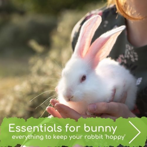 Essentials for your bunny