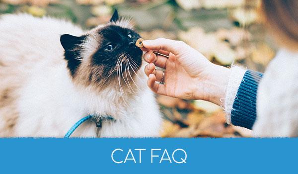 Cat FAQ