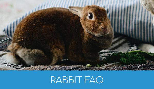 Rabbit FAQ