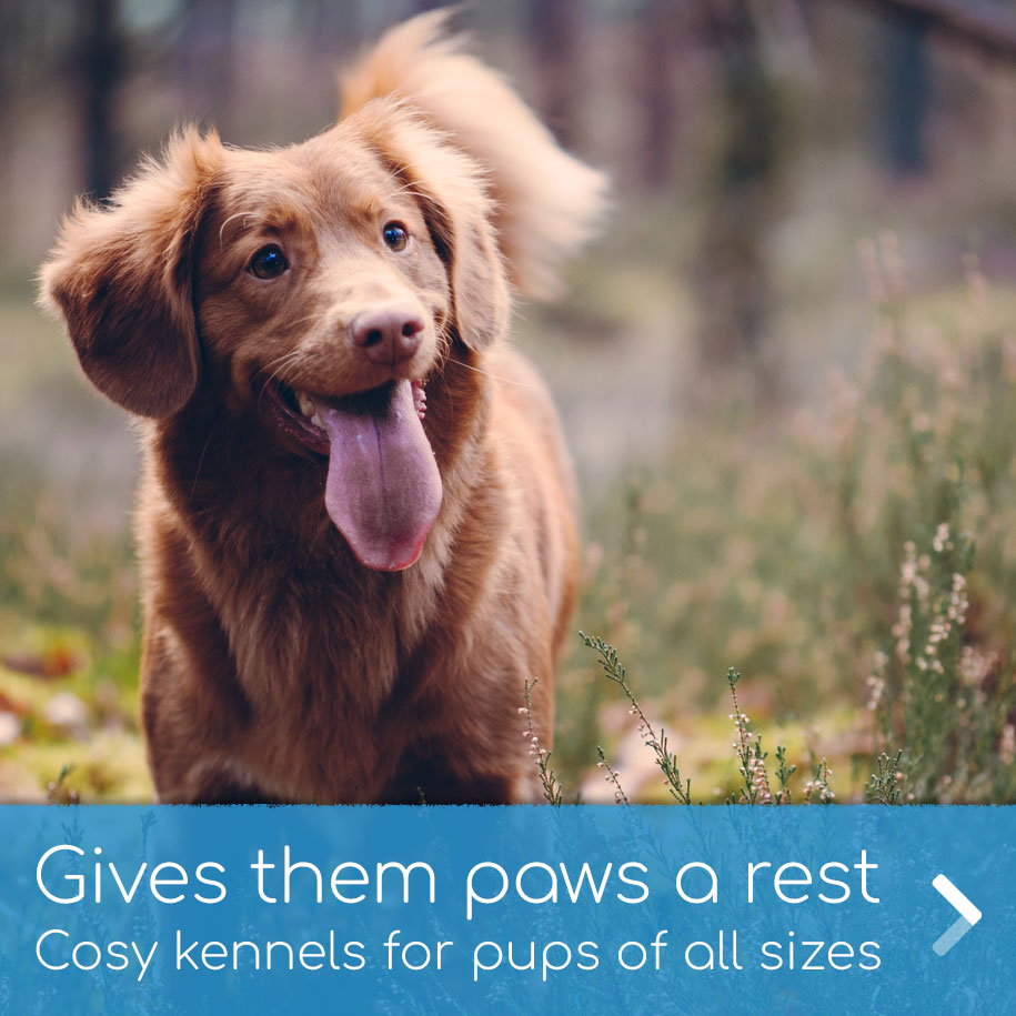 Cosy kennels for dogs of all sizes