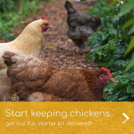 Get our chicken keeping starter kit delivered