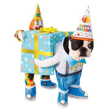 Birthday Present Pet Costume