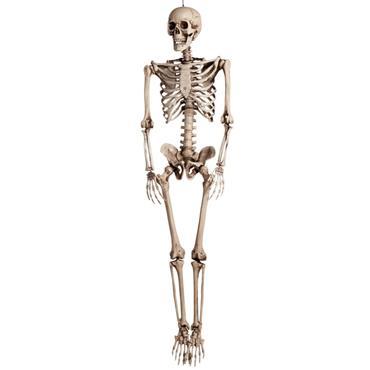 Skeleton (160cm)