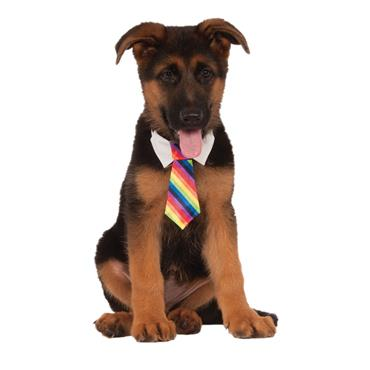 Rainbow Tie Pet Costume